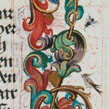 Fliege_7007935-Detail