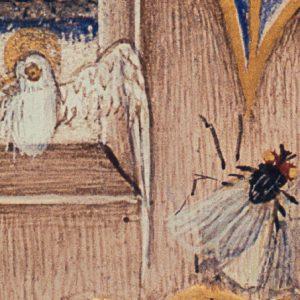 Heiliggeisttaube, Fliege, Pfingsten
